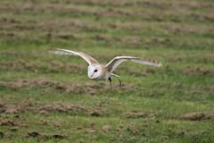 IMG_1437 (Stefan Kusinski) Tags: hemsley duncombe ncbp birdofprey