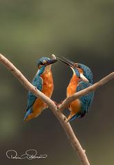 TAR_1760etds (TARIQ HAMEED SULEMANI) Tags: sulemani tariq tourism trekking tariqhameedsulemani winter wildlife wild birds nature nikon