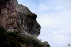 Gorilla face (Olimactro) Tags: gorilla nature naturaleza photography matte painting photoshop