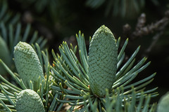 D75_6734 (crispiks) Tags: nikon d750 105mm f28 micro r1c1 albury botanical gardens new south wales