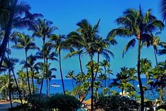 Maui Ka'anapali Beach (gerard eder) Tags: world travel reise viajes america northamerica usa unitedstates hawaii alohastate maui kaanapali kaanapalibeach palmeras palmen palmtrees beach playa strand paisajes panorama landscape landschaft tropical tropicalisland southsea coconuts outdoor sea seascape ocean