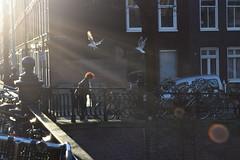 DSC_0663 (elisa.savio) Tags: amsterdam trip travel voyage landscape bike photographer nikkor nikon
