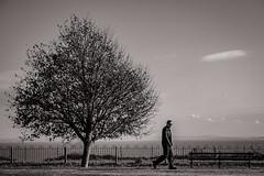 Tree. Man. Seat. Sea. Sky. (raymorgan4) Tags: sea man tree sky seat penarth landscape seascene seaview seaside cardiff wales