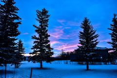 Morning colour. (darletts56) Tags: sky blue cloud clouds pink green white snow tree trees bush bushes fence pole poles sun sunrise yellow orange prairie saskatchewan canada morning home house yard yards field