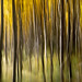 Aspen Forest ICM