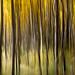Aspen Forest ICM