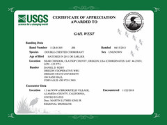 Certificate of Appreciation (Hockey.Lover) Tags: certificateofappreciation doublecrestedcormorant birds banded bandedbird arrowheadmarsh mlkshoreline martinlutherkingjrregionalshoreline