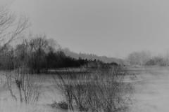 Un long fleuve tranquille (Muse poétique) Tags: fleuve eau water nature arbres trees art artistique artistic monochrome dream rêve
