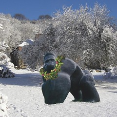Silverback in the snow - Michjael Cooper