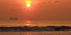 New Beginning (Chandana Witharanage) Tags: srilanka southasia newbeginningin2019 happynewyear morning sun sunshine sunrise sky orange water sea silhouette sunrays dawn awaken beautiful birds birdsflyingovertheorizon naturallight