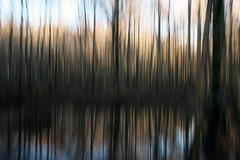 "wetlands vertical pan (""One who sits by the fire"") Tags: blur icm pan verticalpan forest wetlands trees baldcypresstrees williambclarknaturepreserve rossville tennessee hiking hikingthroughthewetlands winter winterhike blurphotography intentionalcameramovement"