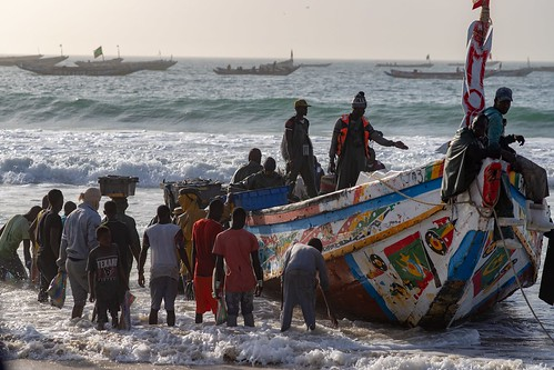 Fishermen boat carrying sardines on Nouakchott beach