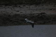 IMG_5187 (monika.carrie) Tags: monikacarrie ythan wildlife scotland