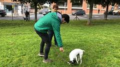 IMG_8618 (Doggy Puppins) Tags: educación canina adiestramiento canino perro dog