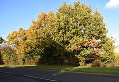 DSC_2241 (PeaTJay) Tags: nikond750 reading lowerearley berkshire gardens outdoors flora fauna plants flowers trees bushes