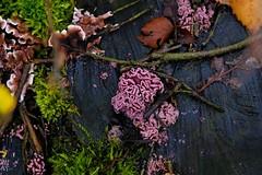 Natural growth on a dead tree (j.a.vink) Tags: 1855 fujifilm1855mm netherlands fujifilm fujifilmxt2