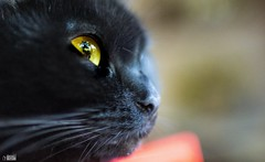Bright Kitty Cat Eyes.. (happad fotografie) Tags: 35mm d610 nikkor nikon bright eyes yellow black pet kat cat