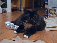 "Batman: ""Don't even think about taking the catnip shark."" (rootcrop54) Tags: batman black tuxedo longhaired longhair newtoy catniptoy shark neko macska kedi 猫 kočka kissa γάτα köttur kucing gatto 고양이 kaķis katė katt katze katzen kot кошка mačka gatos maček kitteh chat ネコ"