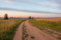 *** (Woodmen19) Tags: russia kirovregion 2018 september autumn nature flora plants trees meadow grass landscape field sunset evening sky clouds light conifers road