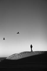 *** (Misha Sokolnikov) Tags: venice venicebeach losangeles la california ca beach sand silhouette seagulls birds sky blackandwhite noiretblanc monochrome leica leicamonochrom leicamm leicamsystem leicacamera 50mm aposummicron asph