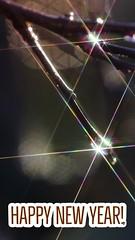 I wish you all a great start into a gapoy new year! 🌟🎊🎉💫🍀 Euch allen einen guten Start in ein frohes und glückliches neues Jahr! (Martin Bärtges) Tags: outdoor outside drausen water tropfen wassertropfen raindrops macrophotography macro makro makrofotografie nature happynewyear farbenfroh colorful nikonphotography nikonfotografie d7000 nikon stars light