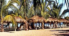 México: Playa de Manzanillo (gerard eder) Tags: world travel reise viajes america mexico méxico northamerica centralamerica colima manzanillo pacific pacificocean pacificcoastline beach playa strand palmeras palmen palmtrees sunbrellas landscape landschaft hotel paisajes panorama outdoor