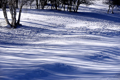 Tree waves (MelindaChan ^..^) Tags: innermongolia china 内蒙古 snow white 雪 tree plant nature chanmelmel mel melinda melindachan 冰 bashang 壩上