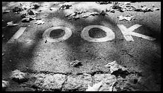 look london (spencerrushton) Tags: spencerrushton spencer canon canonlens canonl canon5dmkiii 5dmkiii 5dmk3 london londonuk londoncity light city cityoflondon uk 1635mm 16mm wide widelens beautiful blackandwhite black bw monochrome sign hydepark autumn