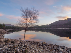 Lone Tree at Loch Beinn a' Mheadhoin (Highlandscape) Tags: iainmacdiarmid highlandscape winter nature mist reflections outdoor rural weather cold unitedkingdom highland solar cloud twilight pinetrees highlandscapezenfoliocom uk ice olympus natural highlands dawn landscape frozen beauty ecosse countryside hill colour em5markii trees january water scotland rocks glen loch clouds sunrise sky lochbeinnamheadhoin glenaffric 2019 affrickintailway mountain