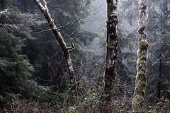 On the Wayside (kephart_kyle) Tags: 2019 foggy coast foliage forest january mist morning northwest oregon pacific pnw rainforest sunrise trees waterfall winter