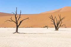 _RJS4680 (rjsnyc2) Tags: 2019 africa d850 desert dunes landscape namibia nikon outdoors photography remoteyear richardsilver richardsilverphoto safari sand sanddune travel travelphotographer animal camping nature tent trees wildlife
