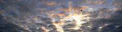 Blackbird (ulbespaans) Tags: blackbird bird sky clouds silhouette mood cloudscape flying background outdoor freedom birdwatching photography