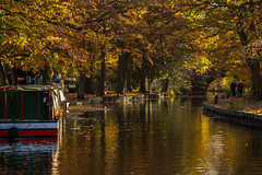 Canal life ii (markhortonphotography) Tags: autumn canalcentre nature water canalboat fall walkers bracken canal fern basingstokecanal surreyheath reflection silverbirch canadagoose leaves surrey autumncolour