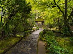 Pathway to the gate (Tim Ravenscroft) Tags: path garden honenin temple kyoto gate landscape japan foliage hasselblad hasselbladx1d