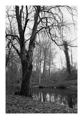 Au bord de l'eau (DavidB1977) Tags: france îledefrance seineetmarne ferrièresenbrie fujifilm x100f monochrome bw nb taffarette arbre eau