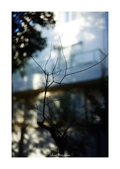 2018/12/1 - 7/15 photo by shin ikegami. - SONY ILCE‑7M2 / Carl Zeiss C Sonnar T* 1.5/50 ZM (shin ikegami) Tags: 紅葉 シルエット silhouette sky 空 井の頭公園 吉祥寺 autumn 秋 sony ilce7m2 sonyilce7m2 a7ii 50mm carlzeiss sonnar csonnar50mmf15 tokyo sonycamera photo photographer 単焦点 iso800 ndfilter light shadow 自然 nature 玉ボケ bokeh depthoffield naturephotography art photography japan earth asia