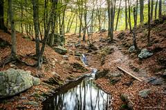 Promenade du Ninglinspo (cedant1) Tags: promenade ninglinspo nonceveux aywaille hike fall water colours orange walk river rocks