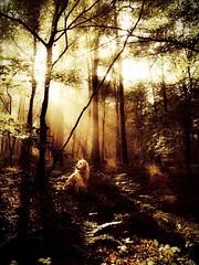 Pjotr in forrest (ericakuiper) Tags: hondenfotografie dogphotography hond hund dog