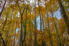 Cherokee National Forest 777 (Steve4343) Tags: steve4343 nikon 7200 appalachian trail cherokee national forest red green blue yellow orange white clouds sky beautiful tennessee autumn beauty johnson county lake watauga cloud colorful woods garden gardens happy leaves rocks wildlife landscape mountain tree trees grass water wood butler summer spring macro flower flowers at 777