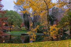 El Otoño en el parque-_DSC3816 (peruchojr) Tags: noche otoño agua lago vigo castrelos galicia españa luces