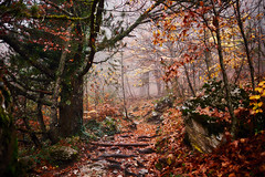 Mount Olympus, October 2018 (CSAOH) Tags: mount olympus oros mountain mountains forest autumn landscape travel travelling hiking hike trail fall trees mist fog greece ellada