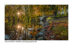 Neulich im Park / recently in the park (H. Roebke) Tags: 2018 autumn georgengarten canon5dmkiv herbst sonnenuntergang fall colour augustenbrücke farbe swan bridge brücke hannover schwan park de sunset lightroom ef1635mmf28liii