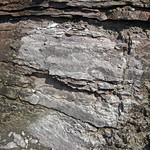Limestone (Mill Knob Member, Slade Formation, Upper Mississippian; Clack Mountain Road Outcrop, south of Morehead, Kentucky, USA) 11 thumbnail