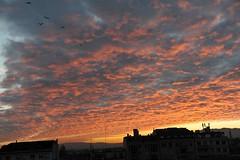 GENEVA (gabrielebettelli56) Tags: switzerland svizzera ginevra geneva sunset tramonto cielo clouds sky red nikon birds