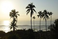 TANZANIA (gabrielebettelli56) Tags: africa tanzania daressalaam trees sea water sunset tramonto nikon travel viaggi mare