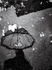 Selflaque d'automne. (LACPIXEL) Tags: selflaque selfie selfportrait autoportrait autorretrato flaque charco puddle paraguas parapluie umbrella feuille leaf hoja automne autumn otono noiretblanc blancoynegro blackwhite flickr lacpixel huawei p20pro
