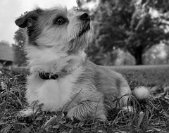 Posing (Lee of Western PA) Tags: pet mutt bokeh samsung galaxy s7 park dof canine portrait