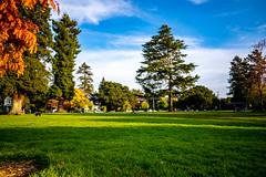 Willard Park, Berkeley (alessio.vallero) Tags: