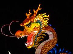 17 Dragons légendaires (christine.petitjean) Tags: gaillac festivaldeslanternes2018 chine tang
