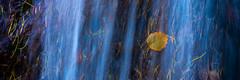 Autumn leaves (piparinn) Tags: ísland iceland eyjafjörður botnsreitur landslag landscape fossar foss water waterfalls haust autumn piparinn heidar nikond610 lauf leaves laufblað